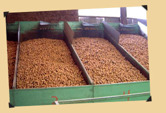 Batches of Walnuts